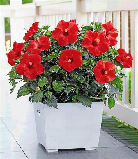 badezimmer teppiche 13 pflegeleichte blühende zimmerpflanzen