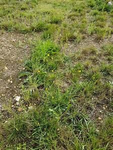 Comment Refaire Sa Pelouse : invasion mauvaises herbes refaire le gazon au jardin forum de jardinage ~ Carolinahurricanesstore.com Idées de Décoration
