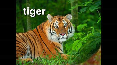 World Animal Adventure, Part 1  Animal Videos For Kids