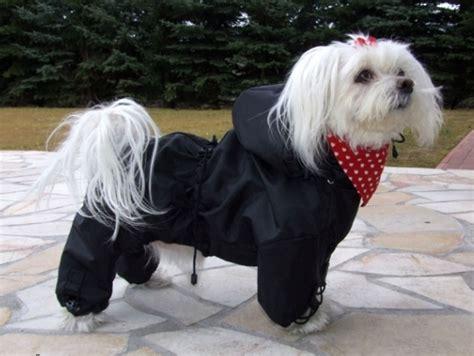 hunde regenanzug black jack hunderegenanzug regenmantel