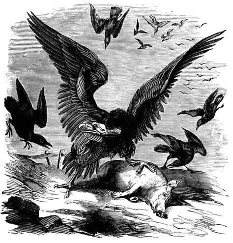 black vulture clipart