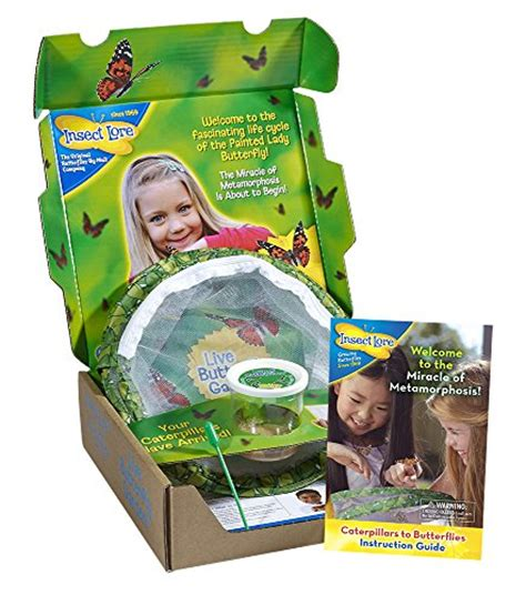butterfly garden kit insect lore live butterfly growing kit 5
