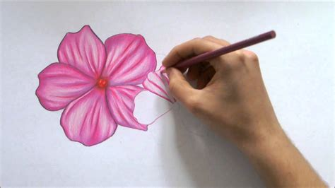 Coloring Flowers With Colored Pencils by Color Drawing Flower At Getdrawings Free For