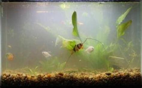cloudy aquarium water tropical fish tank maintenance is cloudy 2017 fish tank maintenance