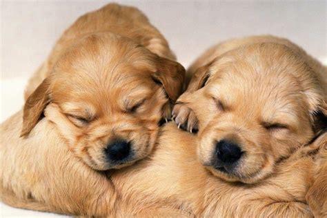 Desktop cutest dogs pics download. Cute Puppy Pictures Wallpaper ·① WallpaperTag
