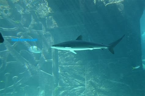how to setup a shark aquarium tank terrors