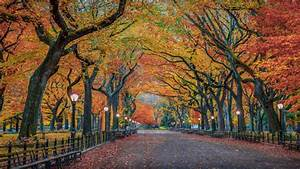 Autumn, Colors, In, Nature, Herbst, Park, New, York, City, Usa, 4k