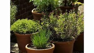 Herbes Aromatiques En Pot : les 25 meilleures id es de la cat gorie plantes en pot sur ~ Premium-room.com Idées de Décoration