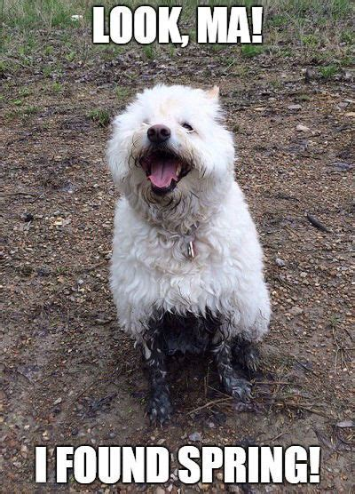 Dog Knows The Joy Of Spring Mud Puddles Cute Pet Memes