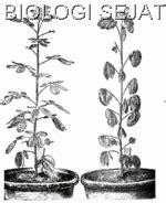 tumbuhan pun bergerak biologi sejati