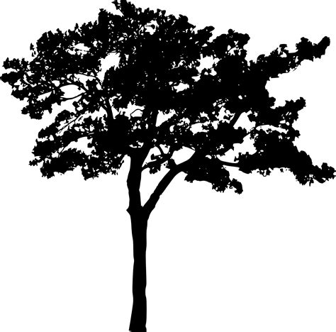 Tree Wallpaper Png by 45 Tree Silhouettes Png Transparent Background Onlygfx