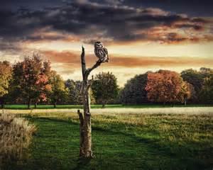 Fall Autumn Desktop Wallpaper Owl