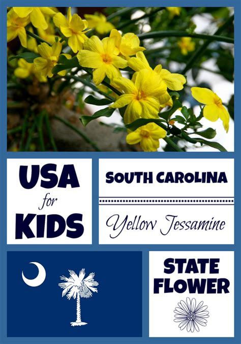 south carolina state flower yellow jessamine usa facts  kids