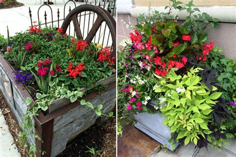 show your favorite summer plants