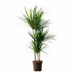 Plante Verte D Appartement : plante verte ikea wish list appartement pinterest ~ Premium-room.com Idées de Décoration