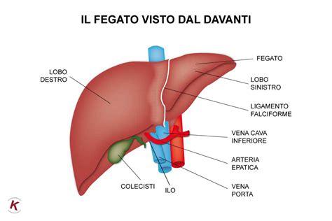 salutebenessere garantire la salute del fegato glpress