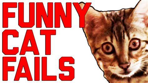 funny cat fails compilation  failarmy
