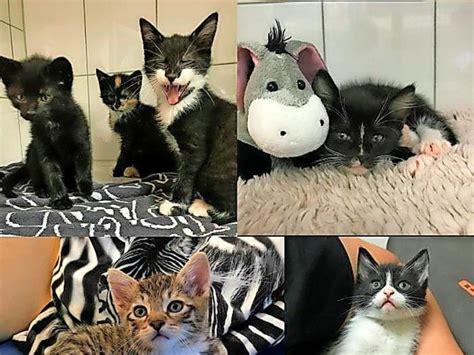 tierheim peine  katzenbabys suchen ein zuhause
