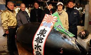 Huge bluefin tuna fetches record price in Tokyo, but whale ...