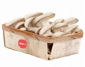 Cultiver Des Champignons De Paris Sans Kit : fungi up ceinture aliment terre li geoise ~ Melissatoandfro.com Idées de Décoration