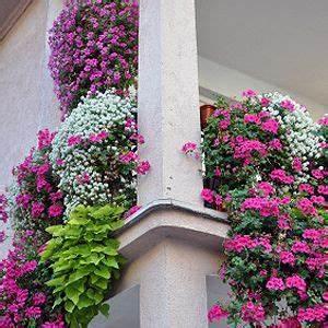 Winterharte Pflanzen Für Balkonkästen : pflegeleichte balkonpflanzen pflanzen pinterest balkon pflanzen balkon und balkon blumen ~ Orissabook.com Haus und Dekorationen