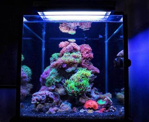 17 best images about fish tanks on cubes aquarium fish and aquarium fish tank
