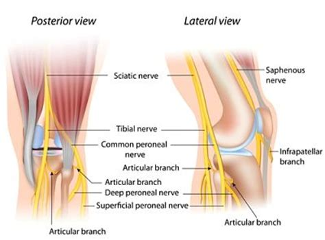 Genicular Nerve Block Cpt Code
