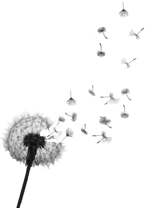 black  grey dandelion tattoo design