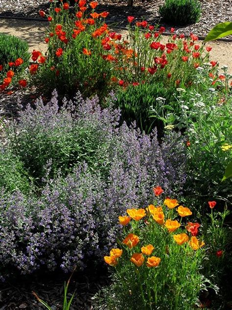 images  native california plants  pinterest