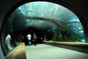 The New Green California Academy of Sciences Unveiled ...