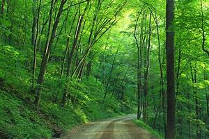 Green Tree Beside Roadway during Daytime · Free Stock Photo