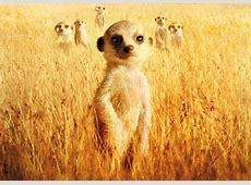 Wächter der Wüste Kinderfilm des Monats Kinderkinobüro