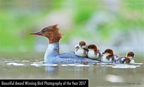 beautiful award winning bird photography   year