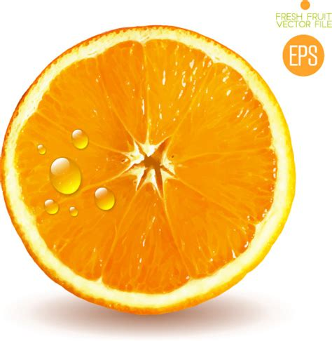 orange slice  vector    vector