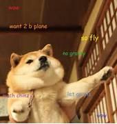 Doge Meme  The Best of...