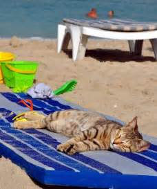 beach bum kitty