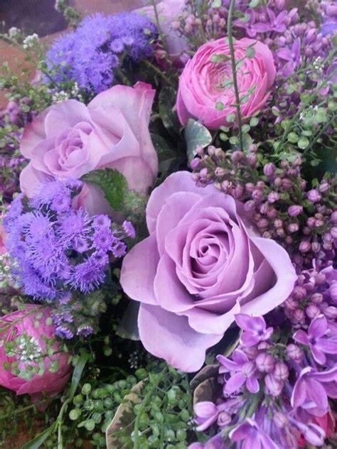 ageratum lilacs ranuncula  purple pictures