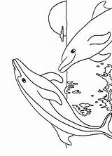Coloring Pages Dolphin Dolphins Print sketch template