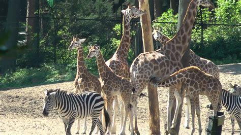 zoo burgers dierentuin