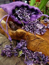Deep Purple Lilac Flowers
