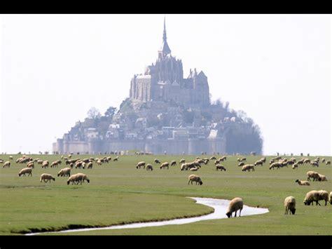 moutons de pr 233 s sal 233 s au mont michel 169 eric lorang