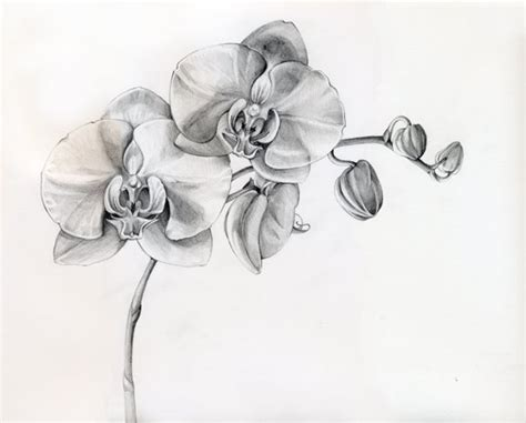 Orchids Tattoo Designs awesome orchid tattoos designs 576 x 463 · jpeg
