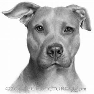 Cool Pitbull Drawings