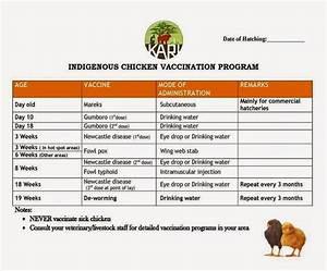 Vaccination Schedule For Kari Improved Kienyeji Chicken