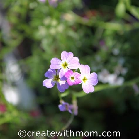create  mom miracle gro flower magic adds colour