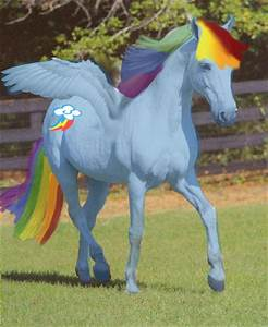 Rainbow Dash...In Real Life! by RigazzBerryJello on DeviantArt