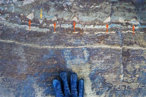 jonathan lambert quanta world s oldest fossils now appear to be squished rocks