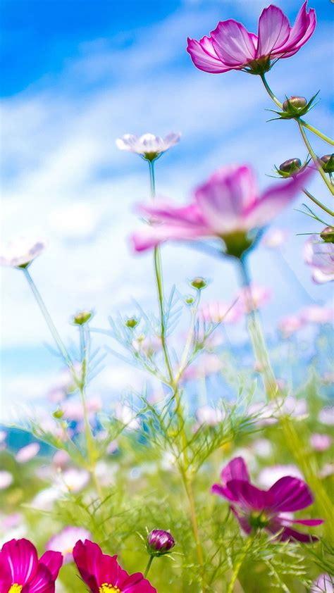 Iphone 6 Flower Wallpaper Hd by Flowers Iphone 6 Wallpaper Hd Flowers
