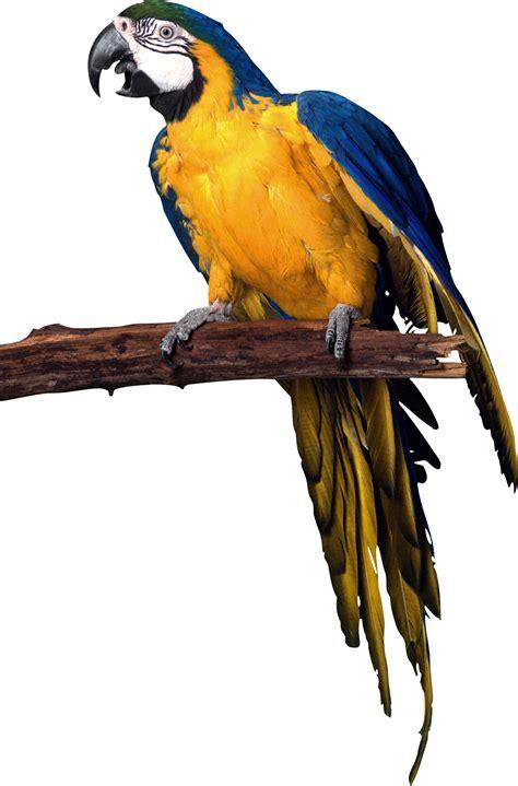 Download Parrot PNG Transparent Images and Clipart Pics ...