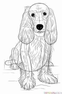 How To Draw A Cocker Spaniel Step By Step Drawing